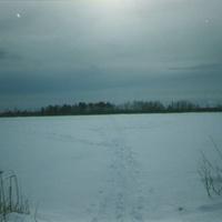 Озеро Соколье у бывшего посёлка Соколья Грива. Вид с востока на запад. Февраль 2007г.