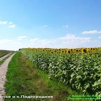 Вторая дорога в село Подгородное, в направлении кладбища села.