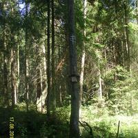 Место бывшей часовни на тропе из села Шатур в Большое Гридино