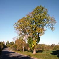 дорога на Волковщину