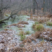 Воронежские болота