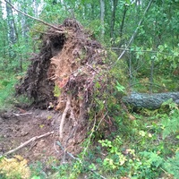 после бури в лесу. сентябрь  2014