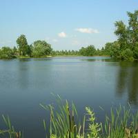 Летний пруд
