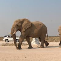 Слоны в Этоше