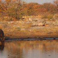 Носорог на водопое