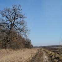 Дорога на Вильшанку из хутора