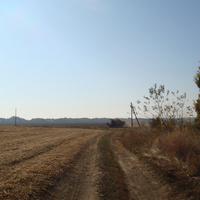Тростинское поле
