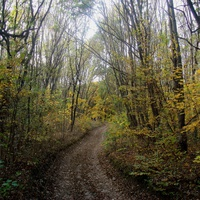 Лес со стороны Вильшанки