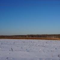 Тростники