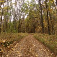 Дорога в Тростинку