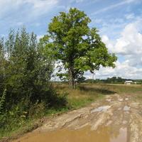 д. Нераж, дорога к деревне