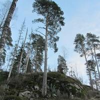 Вокруг усадьбы  Виттрэск