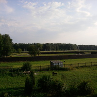 д.кстинино поле