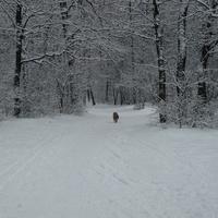 Снежный Воронеж