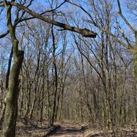 Мартовский лес