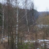 У деревни Тростники