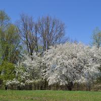 Тростинка, весна.