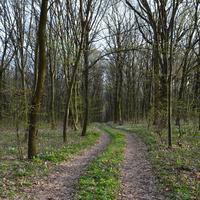 Вильшанка, лес.