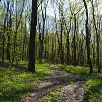 Апрель, лес.