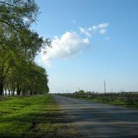 Дорога в Васильков.