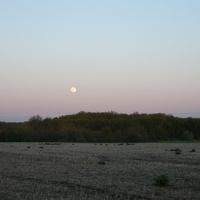 Вечер в поле.