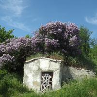 Долбино. Цветущий бункер