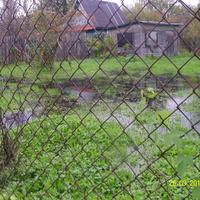 На одном из огородов после дождя