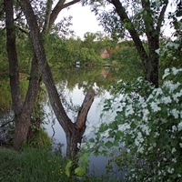 Природа села Болдыревка