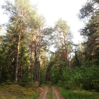 Дорога на Кирпичный