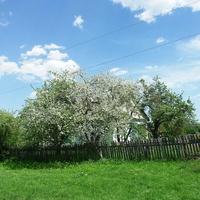 весна в Романінах