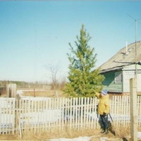 Кедр в деревне Запутное