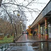Дождливый ноябрь.