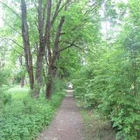Беседа, аллея усадебного парка