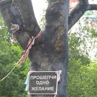 Петрозаводск. Набережная. Дерево желаний. 2015.