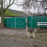 Золотинка. Двор и собака.