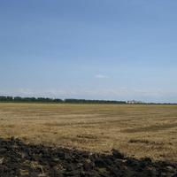 Вид на убранное поле пшеницы и здание элеватора близ железнодорожной станции Степная, июль 2015 года.