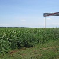 Поле с урожаем подсолнечника и дорожный указатель на выезде из хутора Тауруп Первый, июл 2015 года.