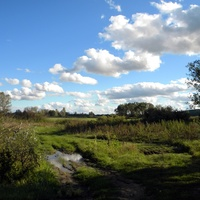 Природа на окраине села Купино