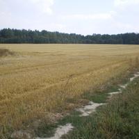 окраина Гуркова Нивы