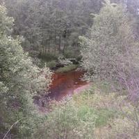 речка  Хоронятка  между  Падбережьем и  Высокушами  Валдайского  района