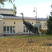 Хамина, страусы