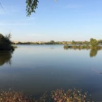На пруду, осень