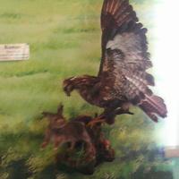 В зале птиц смешанных и хвойных лесов музея «Мир птиц национального парка Мещёра. Канюк