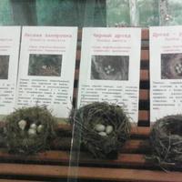 В зале птиц смешанных и хвойных лесов музея «Мир птиц национального парка Мещёра. Яйца снегиря, сойки, лесной завирушки, чёрного дрозда и дрозда-рябинника