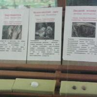 В зале птиц смешанных и хвойных лесов музея «Мир птиц национального парка Мещёра. Яйца вертишейки, мохноногого сыча, лесного конька, пеночки-трещотки