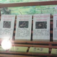 В зале птиц смешанных и хвойных лесов музея «Мир птиц национального парка Мещёра. Яйца славки садовой, полевого жаворонка, пересмешки и овсянки обыкновенных,
