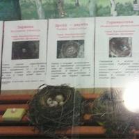 В зале птиц смешанных и хвойных лесов музея «Мир птиц национального парка Мещёра. Яйца заранки, дрозда дерябы и горихвостки