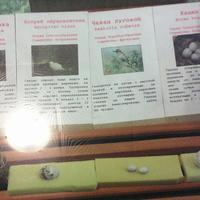 В зале птиц смешанных и хвойных лесов музея «Мир птиц национального парка Мещёра. Яйца серой мухоловки, ястреба-перепелятника, чекана лугового, канюка