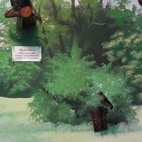 В зале птиц смешанных и хвойных лесов музея «Мир птиц национального парка Мещёра. Пустельга и каменка