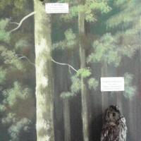 В зале птиц смешанных и хвойных лесов музея «Мир птиц национального парка Мещёра. Серая неясыть и снегирь